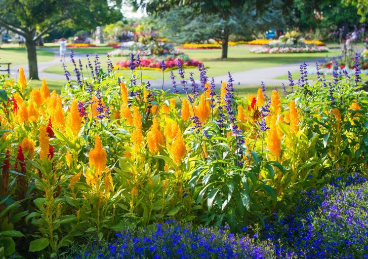 Boscawen park flowers2